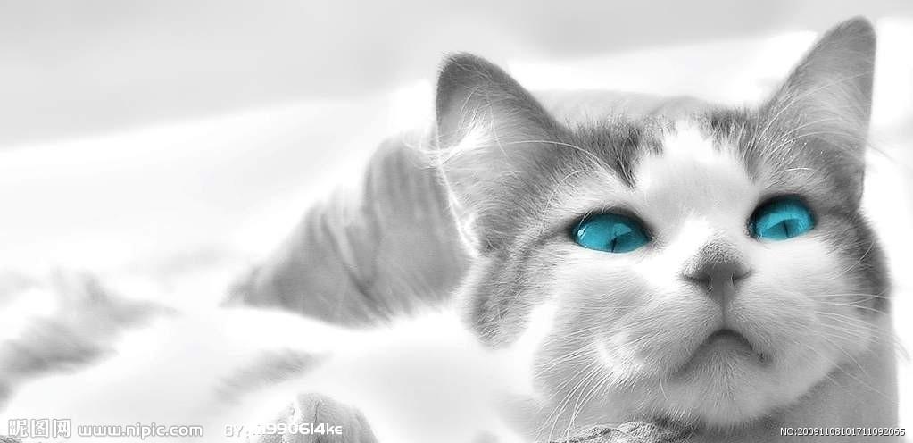 [人物写真] 可爱的小猫咪