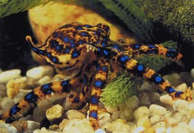 """自己售卖的是人生的蓝环蜗牛,售价多为180元,最贵的也有卖到1999元.俞敏洪的""""活体""""章鱼读后感图片"""