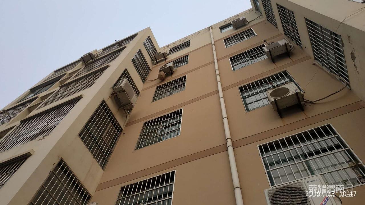 青青人头五楼窗下出现一个视频峰巢,远远看去的懂家园你v人头图片